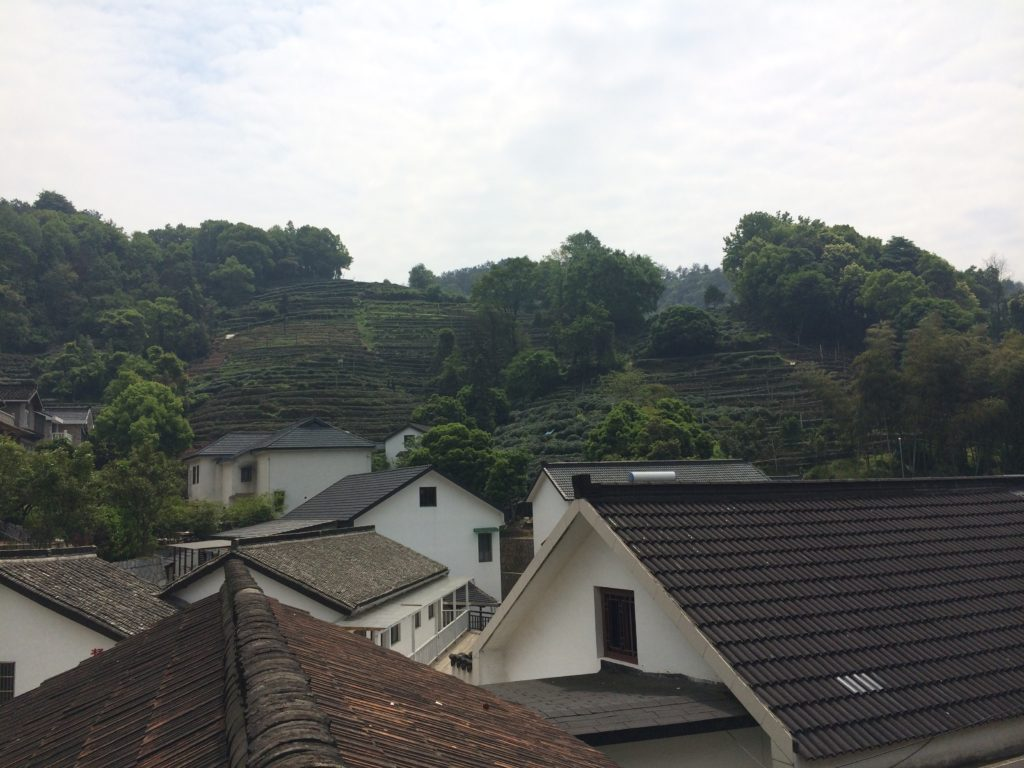 Long Jing green tea garden village